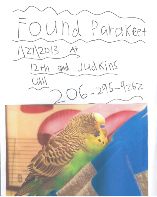 Found Parakeet flyer